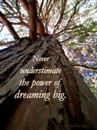 a tree rises