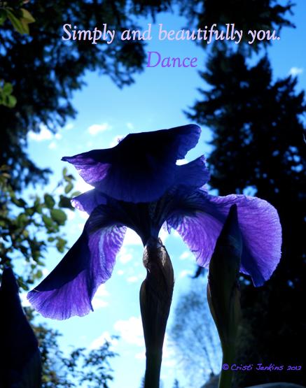 an iris dances