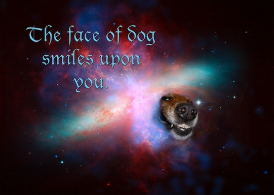 a dog smiles from the cosmos