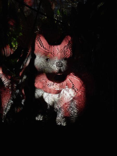 a corgi appears through some curtains © Cristi Jenkins Creations