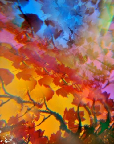 Abstract red, orange, and blue leaves