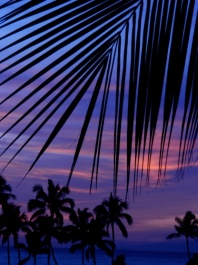 a palm frond against the sunset
