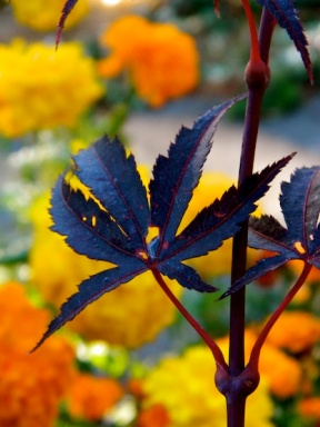 a maroon leaf against an orange backdrop