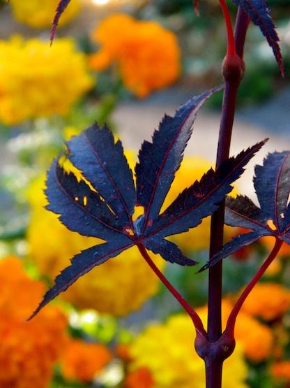a maroon leaf against an orange backdrop