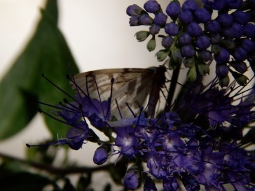 a butterfly rests on a flower
