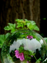 a globe reflects the forest