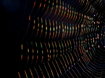 a spider web with a rainbow tint