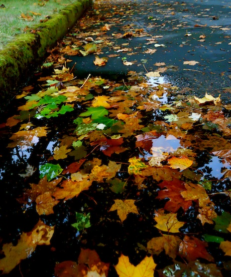 fall leaves in water on the street