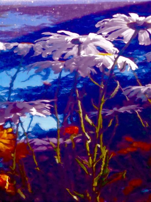 distorted daisies © Cristi Jenkins Creations
