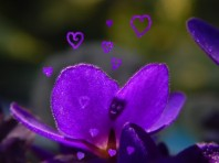 A purple flower being with hearts © Cristi Jenkins Creations